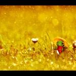 Daniel - Day 240 turtleblues