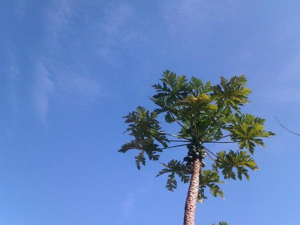三亚天蓝椰飘香。