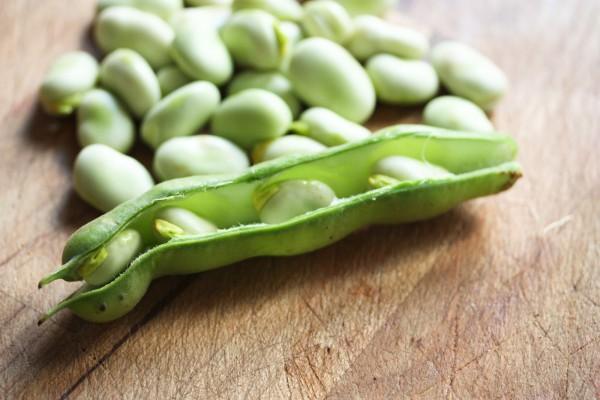 Fava-Beans-3145