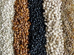 转型为 CCS 教材的豆知识